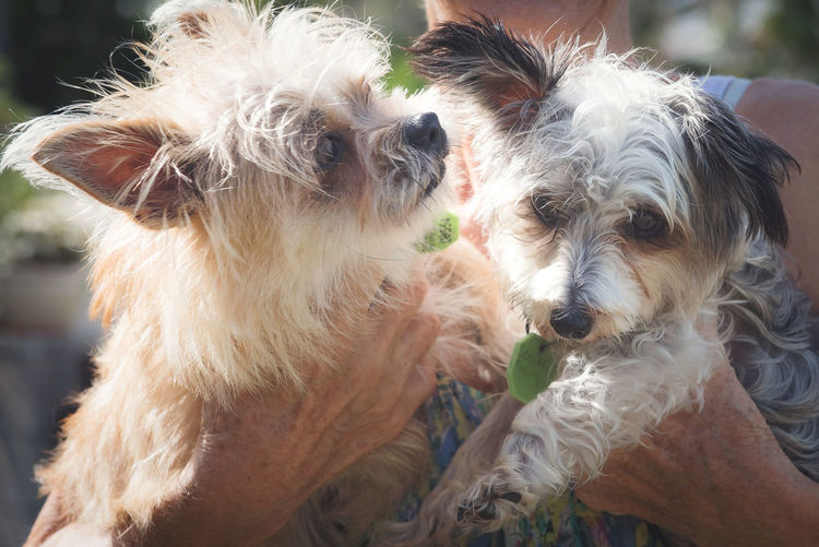 Two Puppies Animal Hair Animal Themes Close-up Day Dog Domestic Animals Mammal One Animal Outdoors Pets Portrait