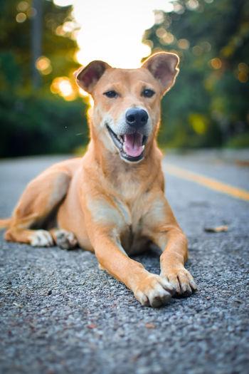 Portrait of dog sitting on road