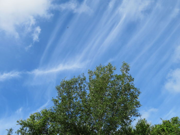 Unusual cloud formations behind trees Blue Sky Blue Sky And Clouds Tree Blue Forest Sky Close-up Cloud - Sky Treetop Tree Canopy  Idyllic Remote Countryside Non-urban Scene Scenics Tranquil Scene Tree Area