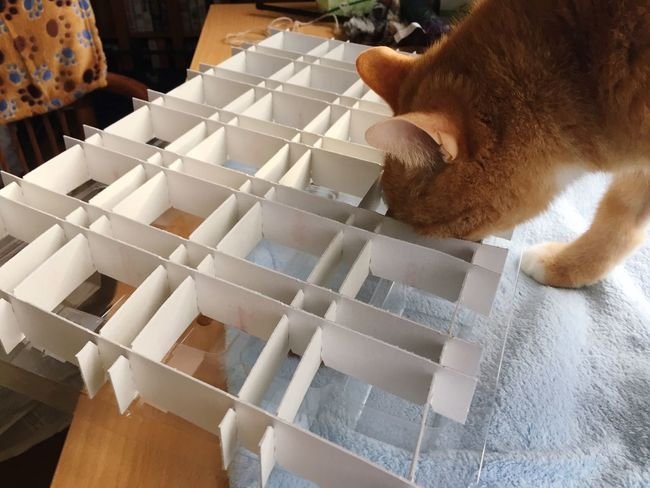 New perspective 🙀 Something Special Yummy Delicious 3XSPUnity Catch The Moment Capture The Moment Focus On Foreground Cat Toy New Something New Katzenleben Amazing Wonderful White Something New EyeEm Selects Domestic Cat High Angle View Pets Indoors  One Animal Domestic Animals