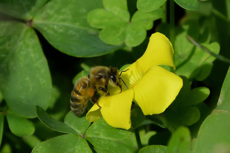 Animal Themes Animal Animals In The Wild One Animal Animal Wildlife Bee Beauty In Nature Insect Flower Nature Close-up Flower Head Pollination Outdoors Plant Leaf