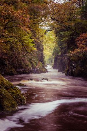 Fairy River Trees Wales Colour Dreamlike Fall Forest Long Exposure River Rocks Water Wet Rocks First Eyeem Photo
