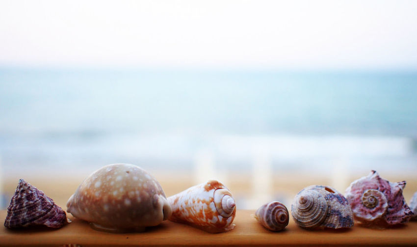 Close-Up Of Various Seashells On Railing At Beach
