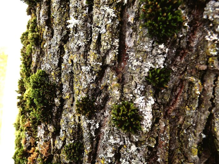 Tree Oldtree #Nature  Nature Followme PLZ FOLLOW ME #follow #f4f #followme #TagsForLikes #TFLers #followforfollow #follow4follow #teamfollowback #followher #followbackteam #followh Follow #f4f #followme #TagsForLikes #TFLers #followforfollow #follow4follow #teamfollowback #followher #followbackteam #followh Forest