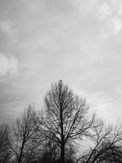 crown Blackandwhite Fairytale Forest Tree Bird Sky Cloud - Sky Animal Themes Flock Of Birds Single Tree