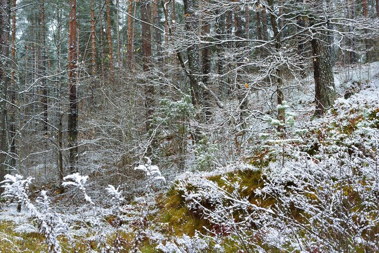View of trees in forest during winter