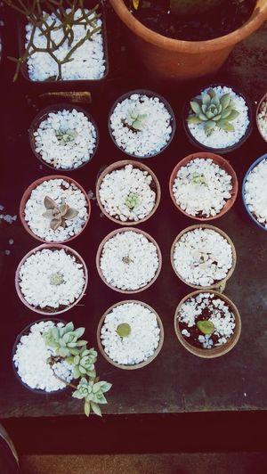 plants. inspiration. life.