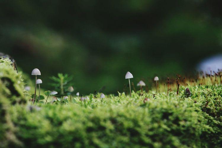Mushroom Grass Nature Fungus Pilz Makro Macro Mossy Moss Moos