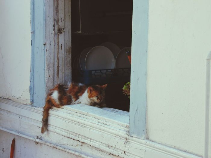 Cat Lovers Hello World Taking Photos Hanging Out Relaxing Enjoying Life Streetphotography Streetcat Cundakedisi EyeEm Nature Lover Naturelovers
