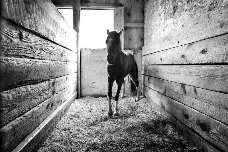 Horse Pony Pony Horse In Stall Barn Horse Snapshots Of Life Newlife