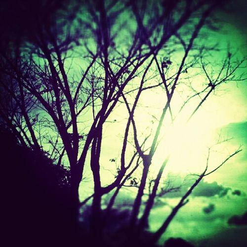 Meu fim de tarde ontem foi assim Nature Tree Sun Photooftheday