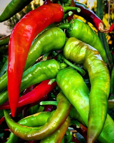 Vegetable Food And Drink Green Color Food Freshness Pepper - Vegetable Healthy Eating Green Chili Pepper Bell Pepper Cucumber No People Close-up Nature Outdoors Mexican Food Day