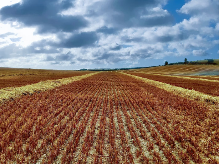 After the crops have gone Cloud - Sky Sky Landscape Land Environment Field Tranquil Scene Agriculture Tranquility Rural Scene Scenics - Nature Beauty In Nature Nature No People Day Horizon Over Land Horizon Farm Plant Growth Outdoors Plantation