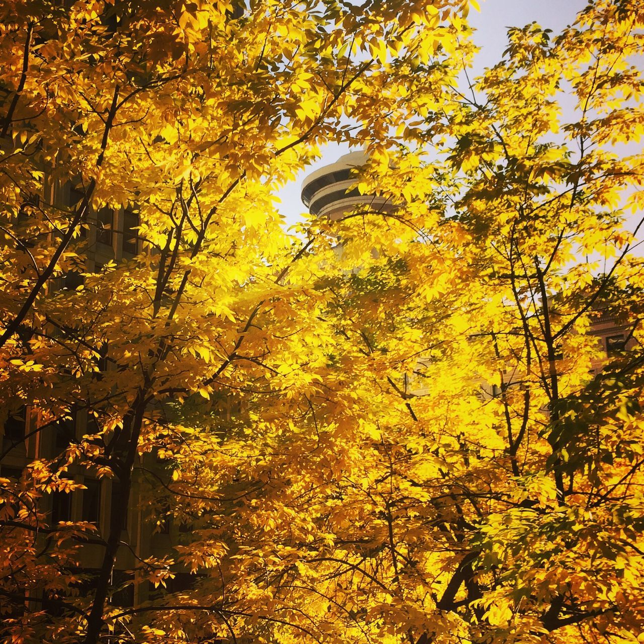 architecture, autumn, building exterior, built structure, tree, low angle view, leaf, change, growth, yellow, no people, outdoors, nature, beauty in nature, branch, day, city, sky