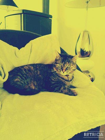 My cat ♥♥ First Eyeem Photo