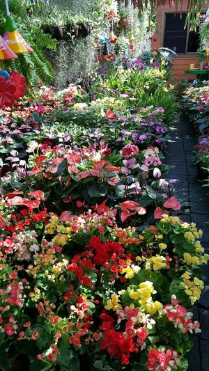 Plantshop Plants And Flowers Plants And Garden Flowershop GardenShop Gardenshoponstreet Garden Shop Flower Flowers,Plants & Garden Flowerslovers Flowerlovers Flowershop On The Street🌷💕