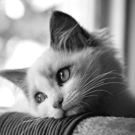 """Sometimes the last person on Earth you wont to be with...is the one person you can't be without."" Pride And Prejudice Quoteoftheday Romantic Movie Missing Someone Cat Lovers Blackandwhite Photography"