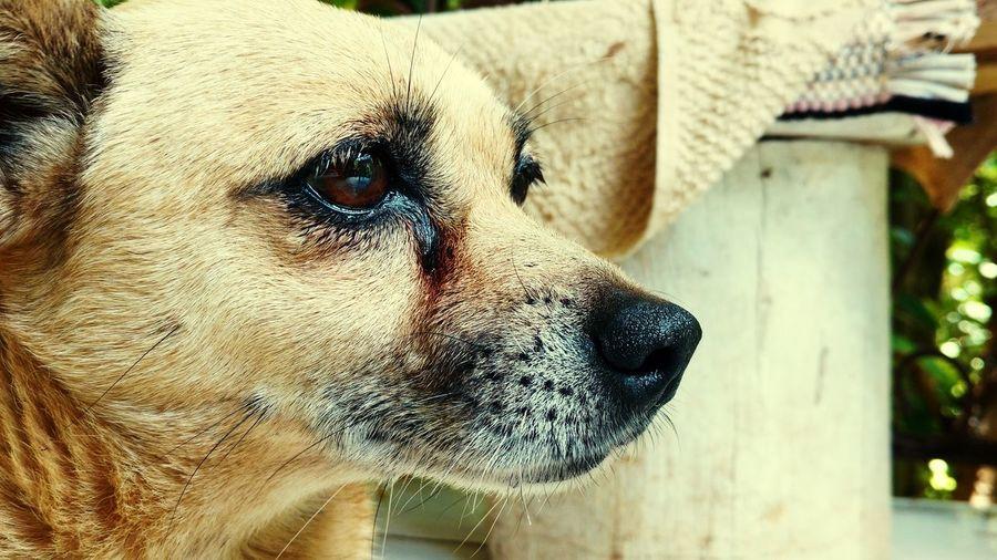 Dog Pets One Animal Close-up Domestic Animals Portrait Animal Themes Mammal Day No People Outdoors Eyelash