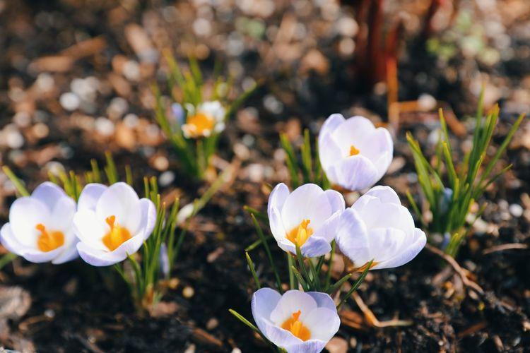 Step of Spring