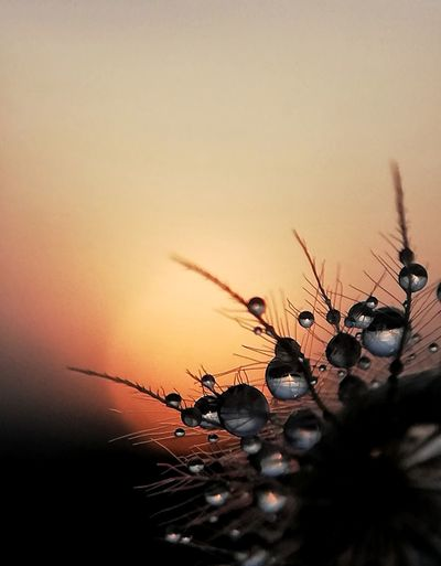 Sunset Droplet