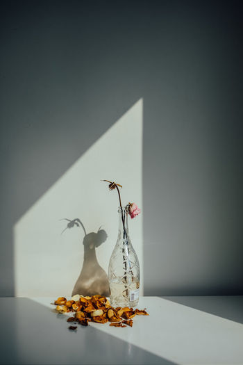 View of dragon on table against white wall