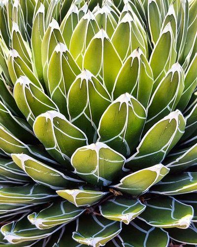 Digging this crazy guy! Desertlife Desert Cactus Succulent Gogreen Painteddesert