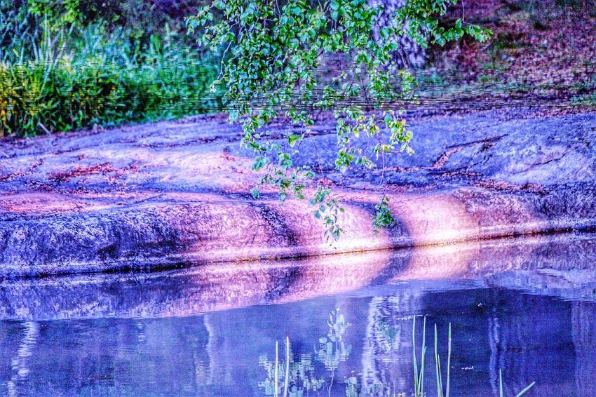 Littoisten Järvi Beauty In Nature Nature Selective Focus Focus On Foreground
