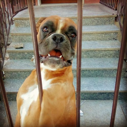 Dog❤ Dog Love Dogs Mydog Mydog♡ MyFavorite  Hello World Hi! MyfirstEyemphoto Myhero❤