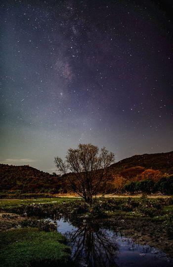 孤樹銀河 Astronomy Galaxy Milky Way Tree Star - Space Space Constellation Mountain Star Field Sky Starry Glittering Star Star Trail Spiral Galaxy Christmas Bauble Nebula Glitter Space And Astronomy