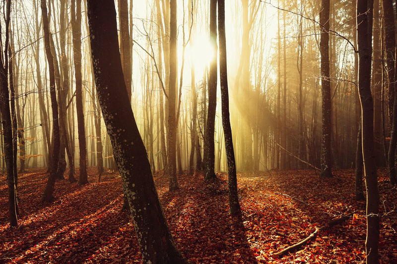 Colorful Leaf Wonderful Autumn Beauty In Nature Branch Day Foggy Forest Foggy Morning Forest Landscape Misty Forest Nature No People Outdoors Scenics Sun Tranquil Scene Tranquility Tree Tree Trunk