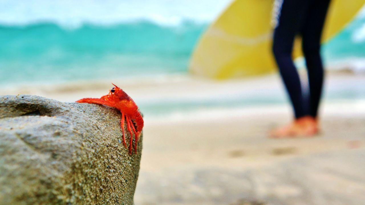 Close-up of crab on log at beach