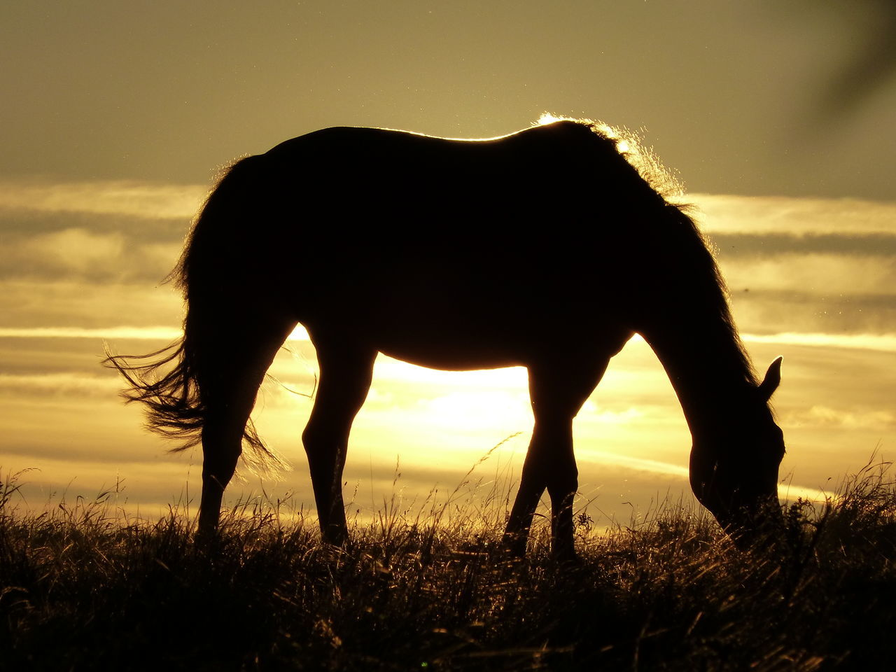 Silhouette Horse Against Sky During Sunset