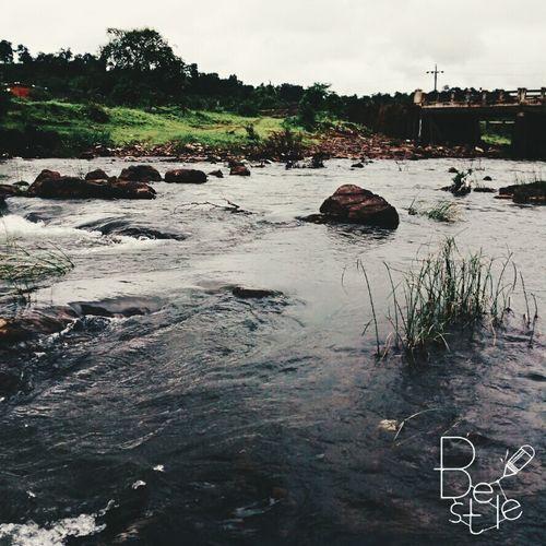 Nature Photography Beauty Riverside Monsoonblossom