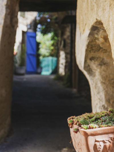 Faucon Provence Provence Alpes Cote D´Azur Arch Architecture Building Built Structure Ceramic Ceramics Close-up Container Day Faucon  Flower Pot Focus On Foreground Food Food And Drink Freshness Growth Nature No People Outdoors Plant Potted Plant Succulent Plant Sunlight