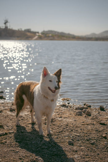 View of dog standing on land