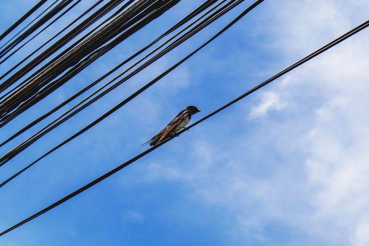 bird Blue Sky