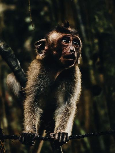 Monkey looking away in forest