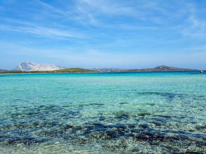 Sea Blue Beauty