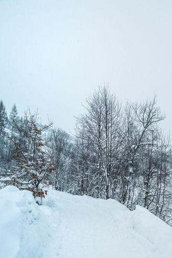 Snow Winter Cold Temperature Tree Sky Beauty In Nature White Color Plant Nature Bare Tree No People Day Tranquility Scenics - Nature Land Field Tranquil Scene Clear Sky Covering Outdoors Snowing Snowcapped Mountain Winter Wonderland