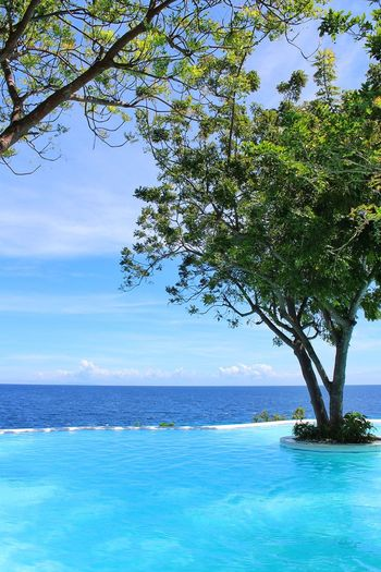 Tree Sea Blue Idyllic Water Scenics Sky Beauty In Nature Nature Branch Day No People Outdoors Horizon Over Water