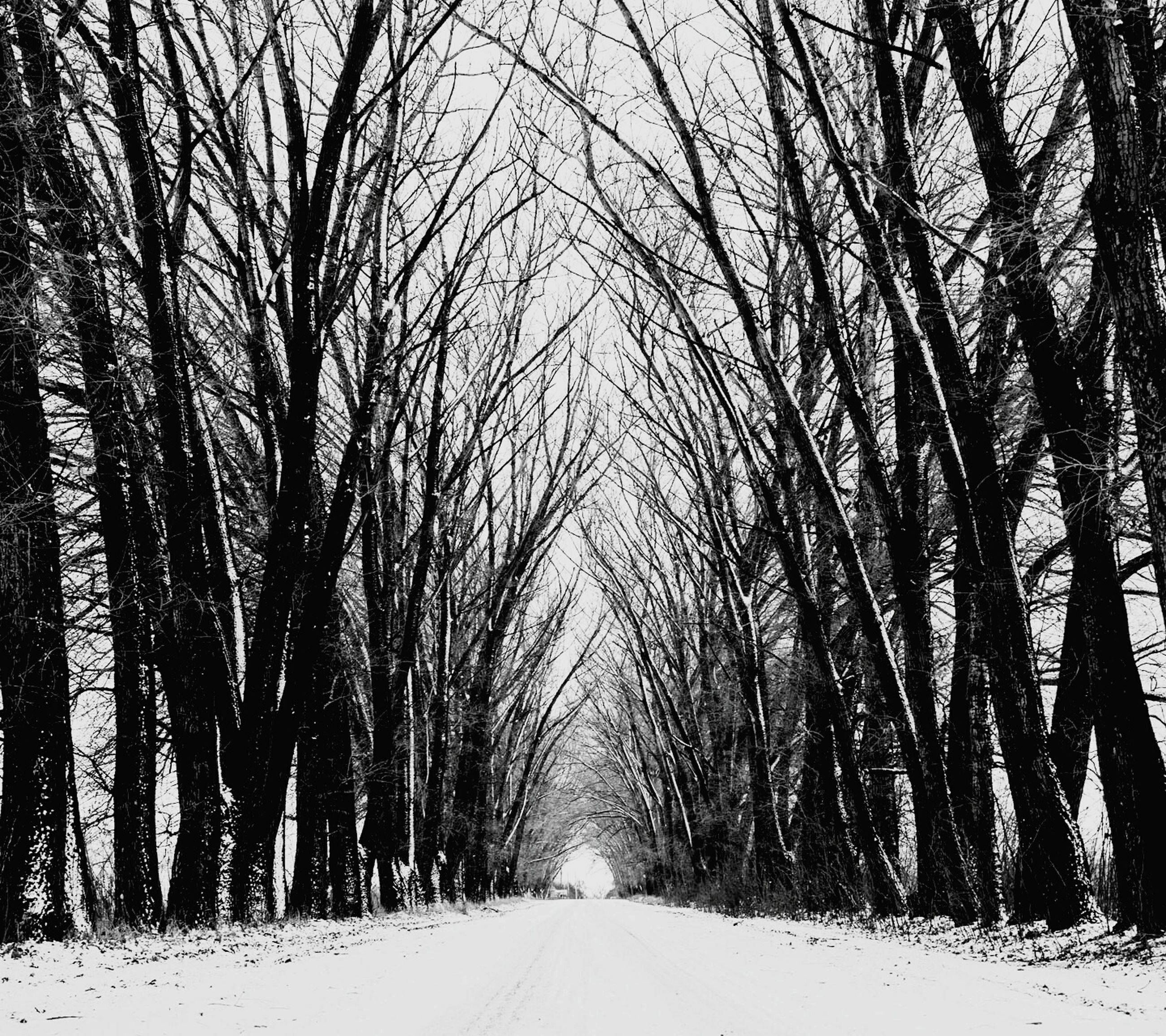 the way forward, tree, diminishing perspective, vanishing point, road, transportation, snow, winter, bare tree, cold temperature, tranquility, nature, treelined, empty road, forest, weather, tranquil scene, branch, season, long