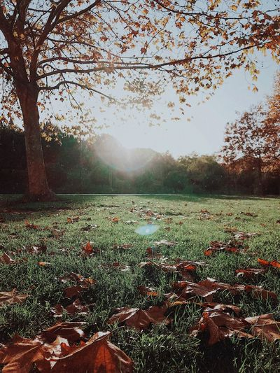 Free fallin' 🍂 Plant Tree Growth Beauty In Nature Nature Land Tranquility Day Field Scenics - Nature No People Tranquil Scene Environment Sunlight Outdoors Non-urban Scene Tranquility Beauty In Nature Tree Nature Grass Autumn Capture Tomorrow