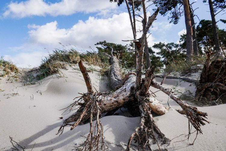 Tree Plant Nature Sky Cloud - Sky Land Day Beach No People Sunlight Tranquility Outdoors Sand Beauty In Nature Tree Trunk Growth Shadow Tranquil Scene Trunk Water