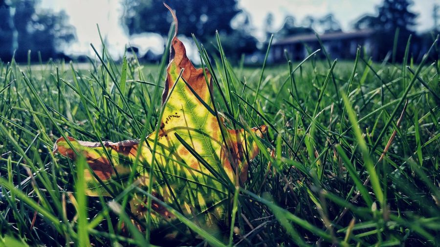 Tadaa Community The Great Outdoors - 2015 EyeEm Awards Summer Nature Beautiful Leaves Grass Elbows Down EyeEm Nature Lover Mobile Photography
