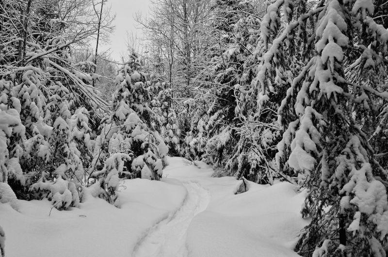Tree Snow Cold Temperature Winter Mountain Landscape