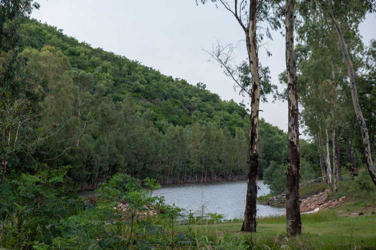 Scenic view of lake amidst trees in forest against sky
