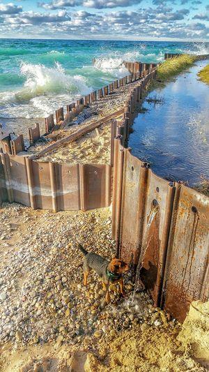 Dog Lakemichigan Beach Waves Water Lakemichiganlighthouses Pointbetsie Breakwall Michigan Puremichigan