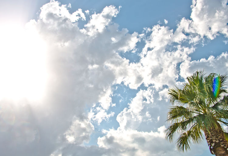 Holiday Summertime Beauty In Nature Cloud - Sky Leaf Low Angle View Nature No People Palm Leaf Palm Tree Plant Scenics - Nature Sky Sunlight Sunny Tree Tropical Climate