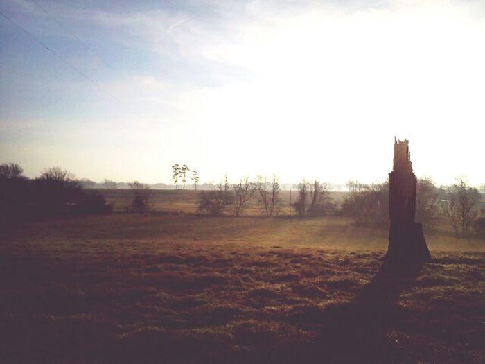 Morning drive Fields Misty Field