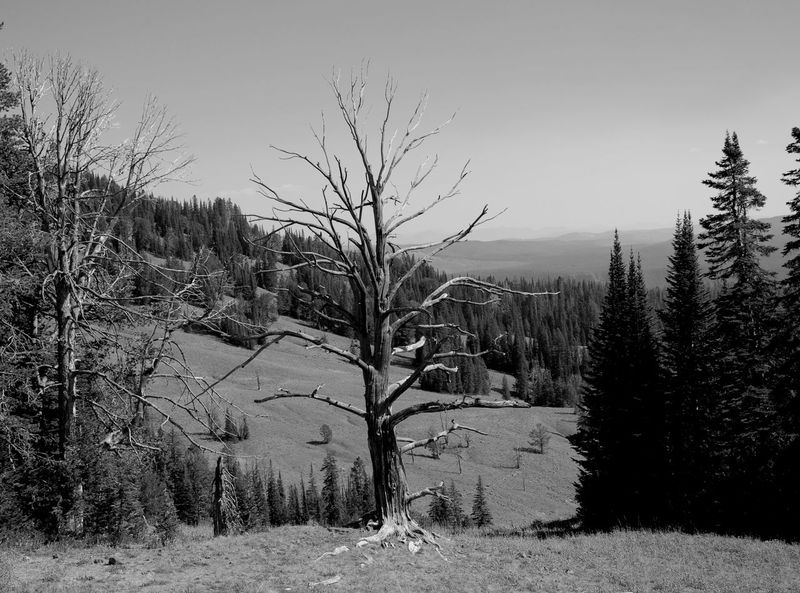 Bare Tree Black & White Black And White Blackandwhite Photography Countryside Dead Tree Dead Treeporn Landscape Montana Natural Natural Beauty Nature Out In The Wilderness Outdoors Quiet Moments Remote Rugged Beauty Tranquil Scene Tranquility Tree Tree Trunk Tree With Character Wilderness